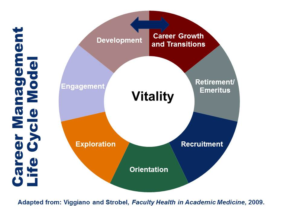 Faculty Life Cycle graphic update April 2015